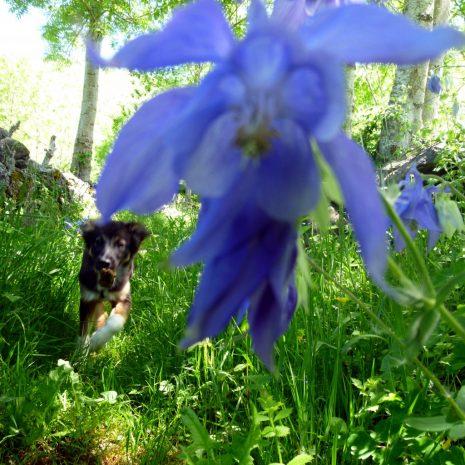 Balagué en fleurs