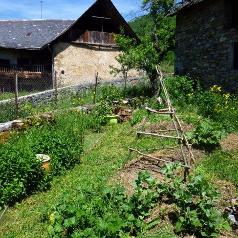 Jardin en mai 2015