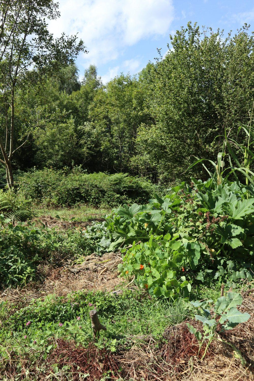 3 zones : au premier plan le potager, puis la friche, puis la forêt