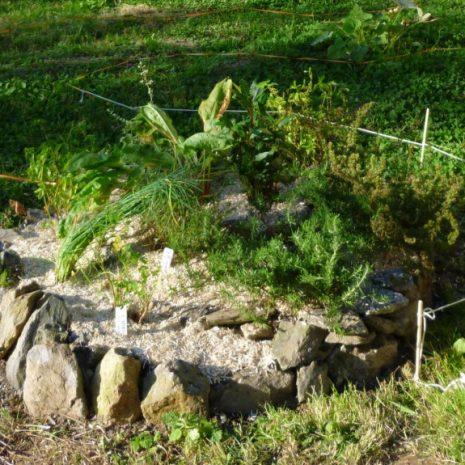 Spirale aromatique en pierre sèche